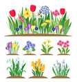 spring garden flowers grass and plant early vector image