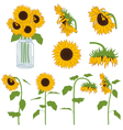 Sunflowers Set vector image