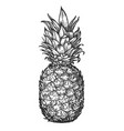 whole pineapple tropical fruit food sketch vector image