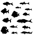 Black fish silhouettes isolated on white vector image