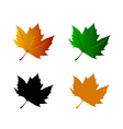 Leaf of maple vector image