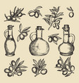 olive branch tree and oil and bottle hand drawn vector image vector image