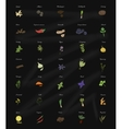 Collection of herbs and spices for the kitchen on vector image