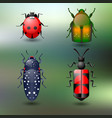 set of four colored beetles on green background vector image vector image