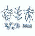conifers hand drawn branches set vintage style vector image vector image