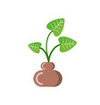 flower growing in pot from soil isolated icon vector image vector image
