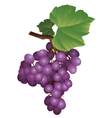 picture of a bunch of grapes vector image vector image