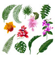 set of tropical flowers bouquet vector image