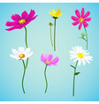 set of wild summer flowers vector image