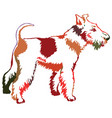 colorful decorative standing portrait of dog fox vector image vector image