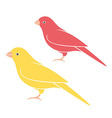 Canary vector image vector image