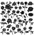 silhouette a rose flower big set vector image vector image
