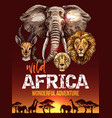 african safari poster with wild animals sketches vector image