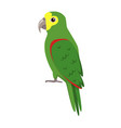 amazon parrot icon in flat style