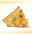 apricot still life vector image vector image