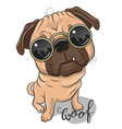 cute pug dog with sun glasses vector image