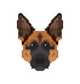 german shepherd head in pixel art style dog vector image