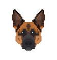 german shepherd head in pixel art style dog vector image vector image