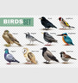 realistic birds transparent set vector image vector image