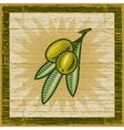 Retro olive branch vector image vector image