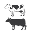 Two cows vector image vector image