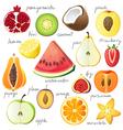 half of a fruits vector image