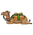 cartoon camel with saddle vector image