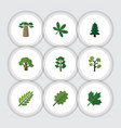 flat icon bio set of baobab leaves maple and vector image vector image