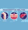regenerative abilities human medicine vector image vector image