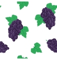 Seamless Pattern with Bunches of Black Grapes on vector image vector image