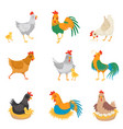 Flat set with chickens little chicks and vector image