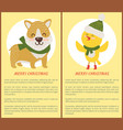 merry christmas congratulation set of posters vector image