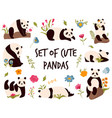 set cute cheerful pandas in different poses vector image