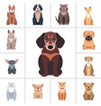 dachshund and other dog breeds set vector image