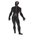 diagram human nervous system vintage vector image vector image