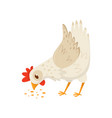 hen eating seeds domestic fowl with bright red vector image