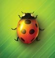 Realistic ladybug vector image vector image