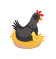 black hen with yellow chick sitting in nest farm vector image