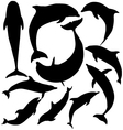 Dolphin silhouette vector | Price: 1 Credit (USD $1)
