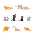 set of funny cats in flat design vector image vector image