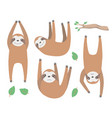 sloth mix vector image vector image