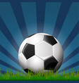 soccer ball on grass vector image