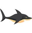 black shark vector image