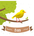 cartoon yellow bird vector image vector image