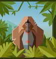 flat geometric jungle background with gelada vector image vector image