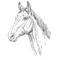 horse portrait-1 vector image vector image