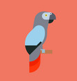 parrot bird breed species animal nature tropical vector image