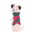 funny puppy warm winter sweater symbol xmas vector image vector image