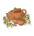 rooibos tea vector image