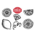 collection hand drawn citrus vector image